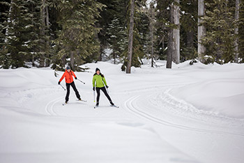 Two cross country skiers on a track in the forest